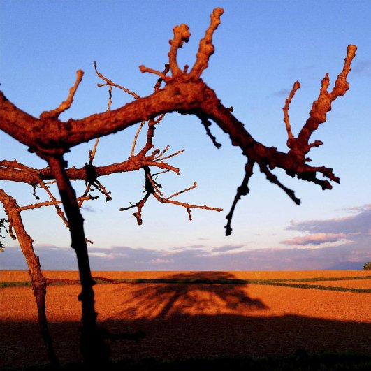 Самая длинная фотосессия одного дерева, снятая на iPhone - целый год! - №33