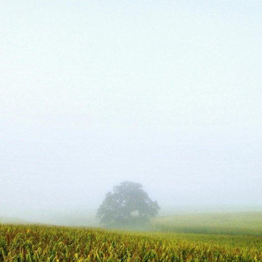 Самая длинная фотосессия одного дерева, снятая на iPhone - целый год! - №35