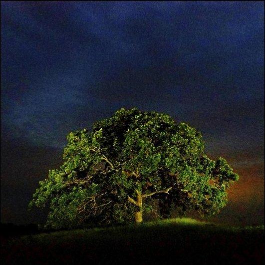 Самая длинная фотосессия одного дерева, снятая на iPhone - целый год! - №37