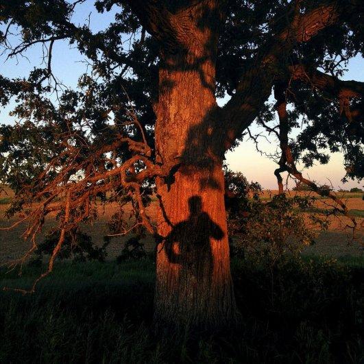 Самая длинная фотосессия одного дерева, снятая на iPhone - целый год! - №38