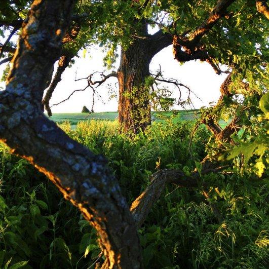 Одно дерево