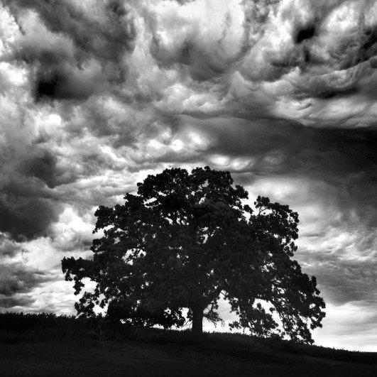 деревья фото
