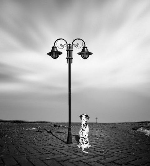 Автор — Caras Ionut