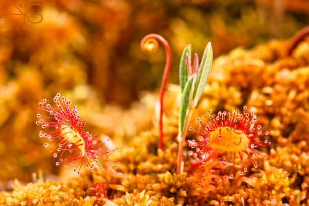 фото макро цветов