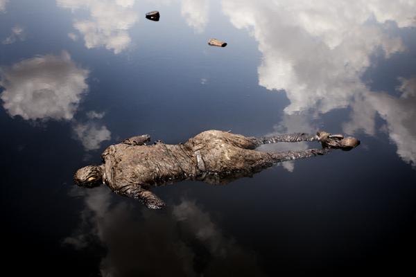 15 лучших работ World Press Photo 2013: выбор Сергея Максимишина - №1