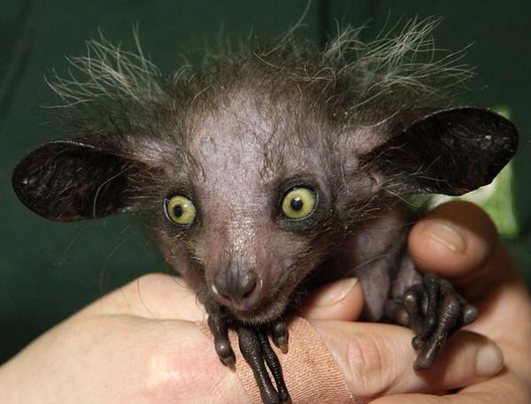 Топ фото - Самые странные животные на Земле, никакого Фотошопа - №1