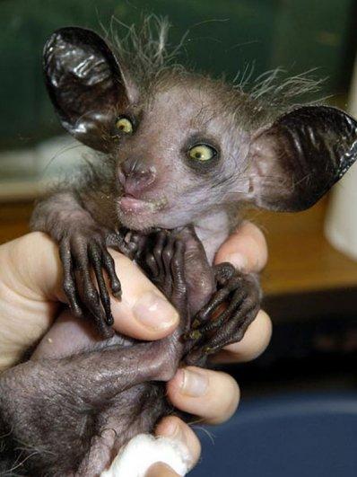 Топ фото - Самые странные животные на Земле, никакого Фотошопа - №2