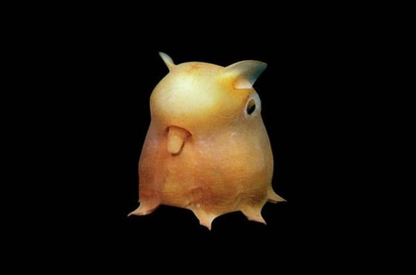 Топ фото - Самые странные животные на Земле, никакого Фотошопа - №3