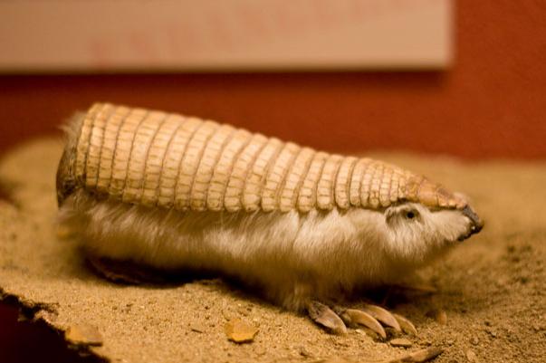 Топ фото - Самые странные животные на Земле, никакого Фотошопа - №5