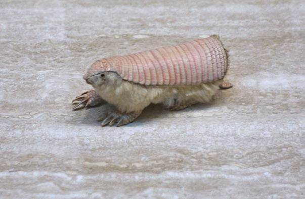 Топ фото - Самые странные животные на Земле, никакого Фотошопа - №6