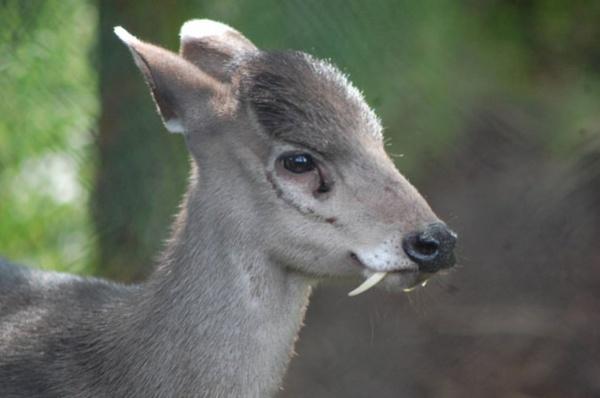 Топ фото - Самые странные животные на Земле, никакого Фотошопа - №8