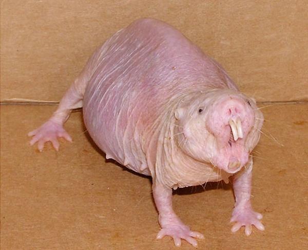 Топ фото - Самые странные животные на Земле, никакого Фотошопа - №9