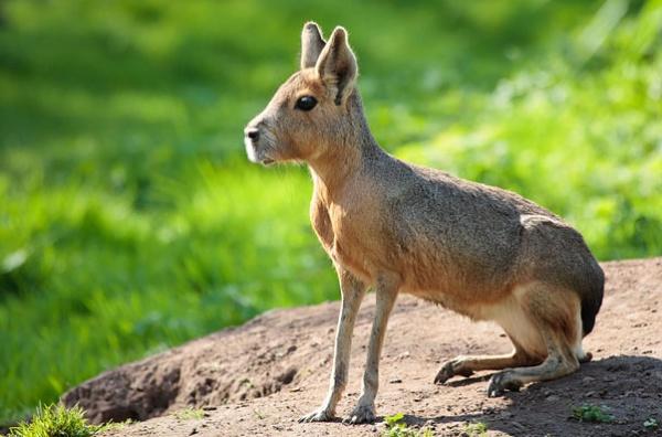 Топ фото - Самые странные животные на Земле, никакого Фотошопа - №10
