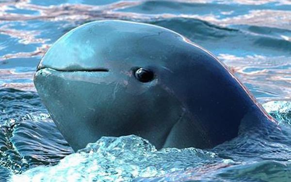 Топ фото - Самые странные животные на Земле, никакого Фотошопа - №12