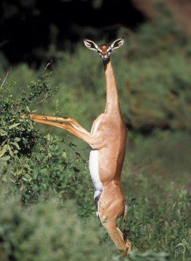 Топ фото - Самые странные животные на Земле, никакого Фотошопа - №13