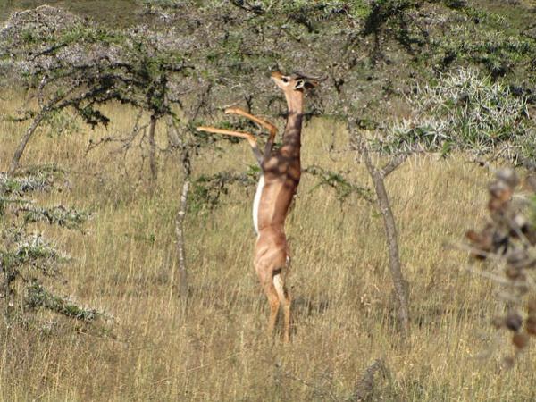 Топ фото - Самые странные животные на Земле, никакого Фотошопа - №14