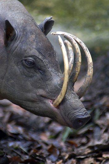 Топ фото - Самые странные животные на Земле, никакого Фотошопа - №16