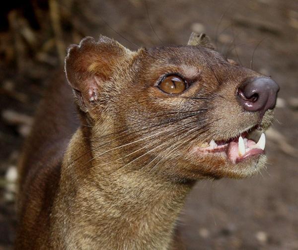 Топ фото - Самые странные животные на Земле, никакого Фотошопа - №19