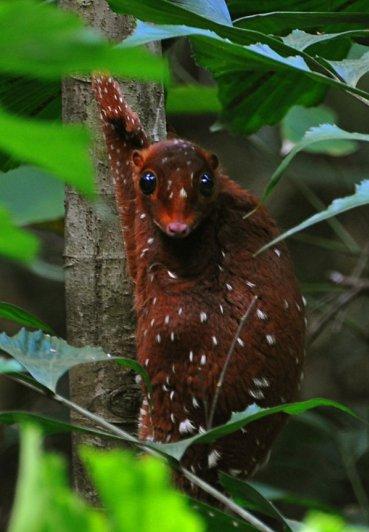 Топ фото - Самые странные животные на Земле, никакого Фотошопа - №21