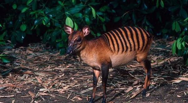 Топ фото - Самые странные животные на Земле, никакого Фотошопа - №22