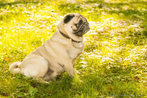 Как лучше всего произвести фото съемку собаки - №1
