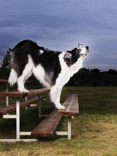 Подборка самых-самых из Книги Рекордов Гиннеса за 2012 год - №20