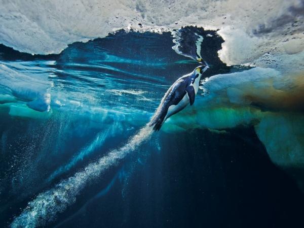National Geographic: лучшие фото издательства за последние годы - №1