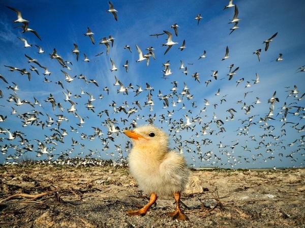 National Geographic: лучшие фото издательства за последние годы - №18