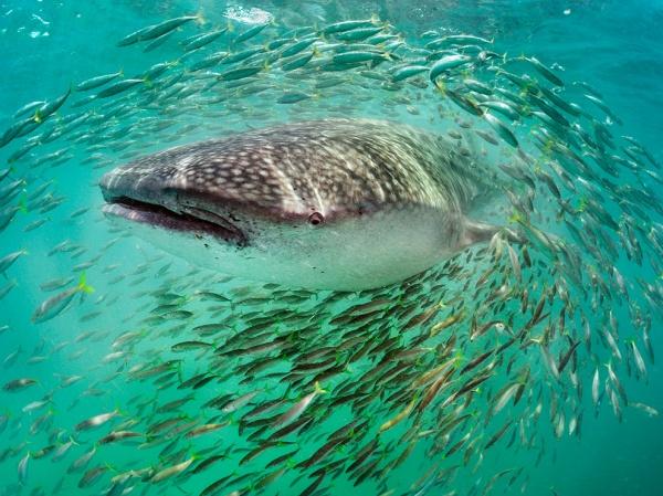 National Geographic: лучшие фото издательства за последние годы - №22