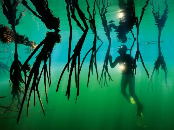 National Geographic: лучшие фото издательства за последние годы - №26