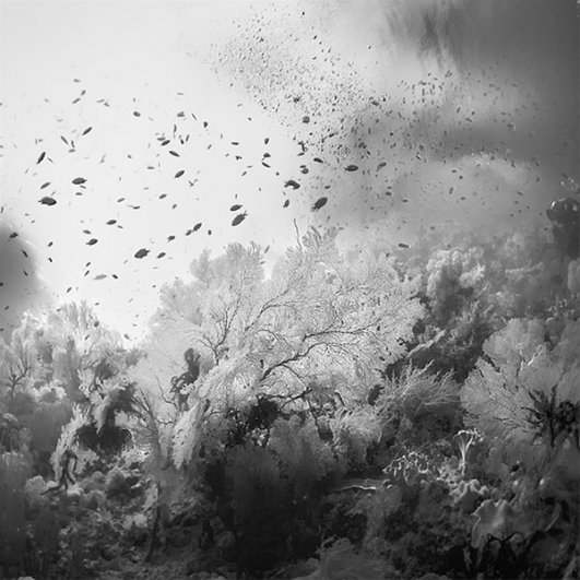 фото в черно белом