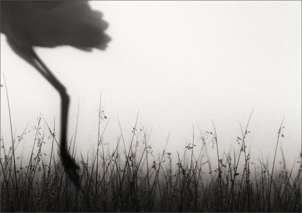 как сделать черно белое фото