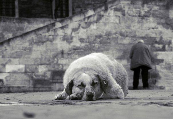 Россиянин стал лучшим фотографом года. Worldwide Photography Gala Awards - №6