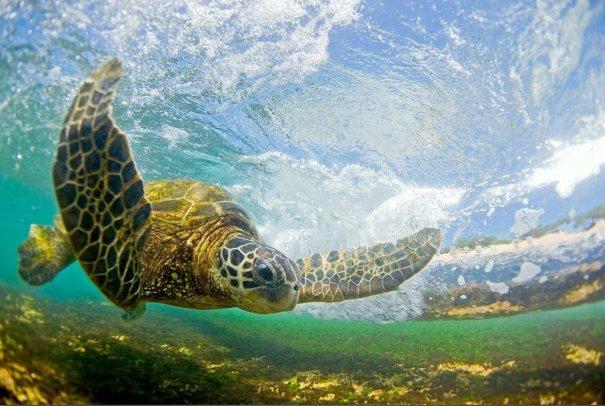 Шикарные морские волны, Гавайи - №5