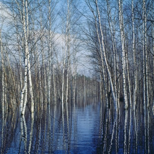 русский пейзаж фото