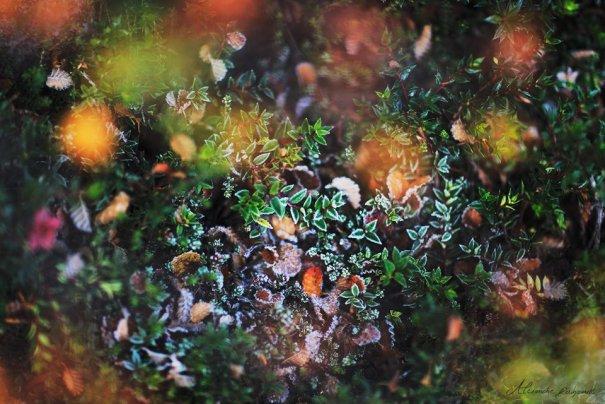 Пейзажи Alexandre Deschaumes как красивые картинки из фэнтэзи - №11