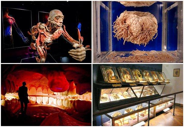 ТОП фото - самые популярные и шокирующие анатомические музеи - №1