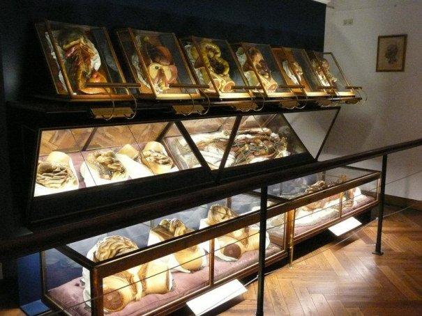 ТОП фото - самые популярные и шокирующие анатомические музеи - №3