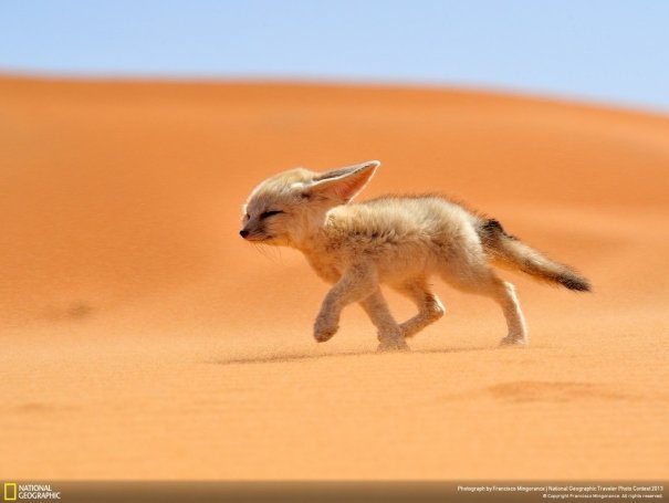 Отобраны лучшие фото животных с фотоконкурса «National Geographic Traveler» - №1