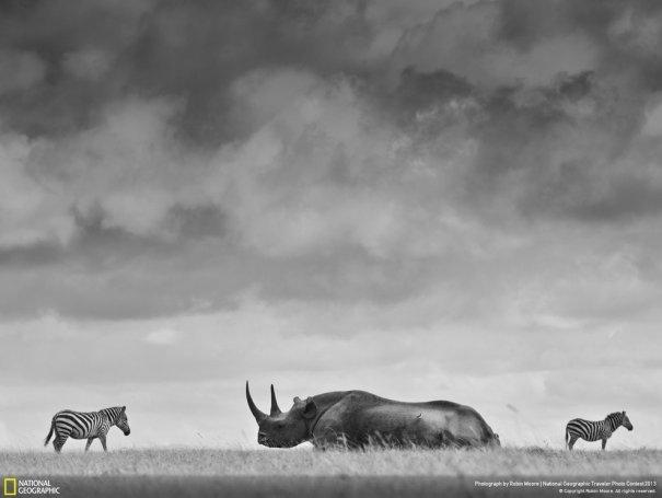 Отобраны лучшие фото животных с фотоконкурса «National Geographic Traveler» - №2