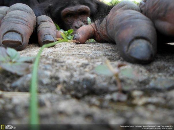 Отобраны лучшие фото животных с фотоконкурса «National Geographic Traveler» - №3
