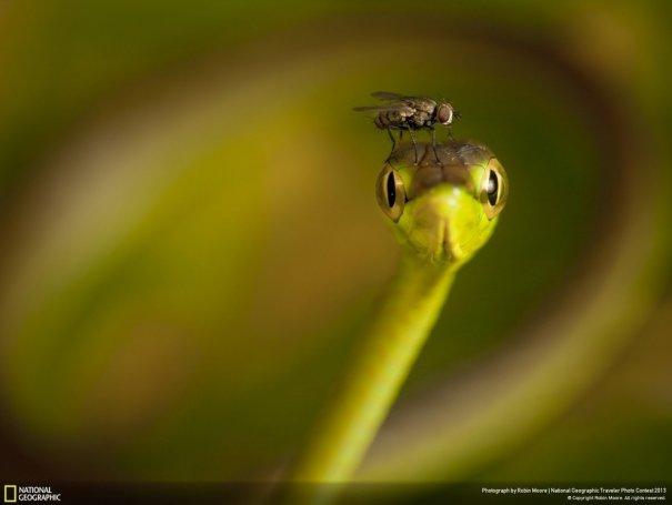 Отобраны лучшие фото животных с фотоконкурса «National Geographic Traveler» - №4