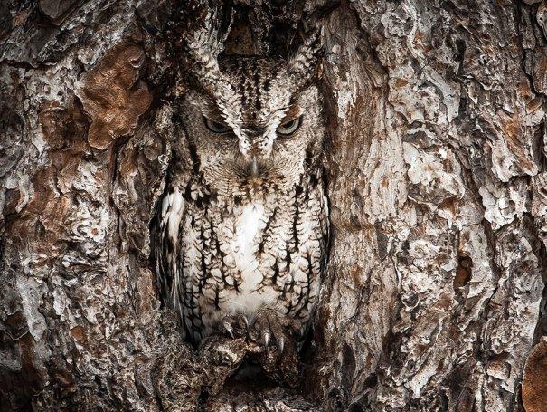 Отобраны лучшие фото животных с фотоконкурса «National Geographic Traveler» - №5