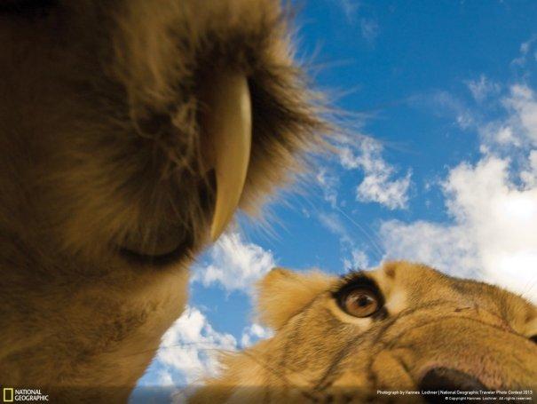 Отобраны лучшие фото животных с фотоконкурса «National Geographic Traveler» - №6