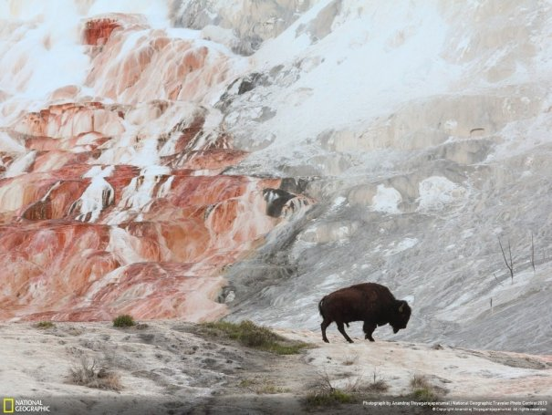 Отобраны лучшие фото животных с фотоконкурса «National Geographic Traveler» - №7
