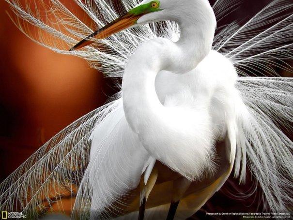 Отобраны лучшие фото животных с фотоконкурса «National Geographic Traveler» - №8