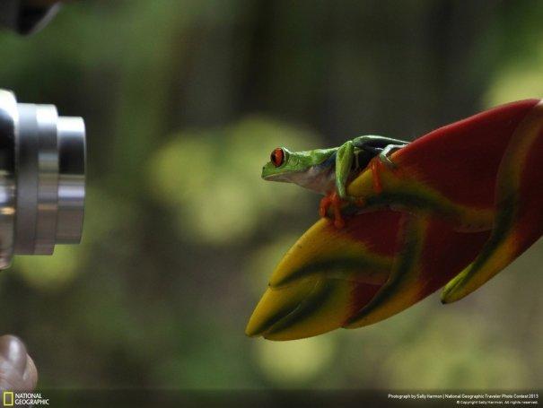 Отобраны лучшие фото животных с фотоконкурса «National Geographic Traveler» - №9