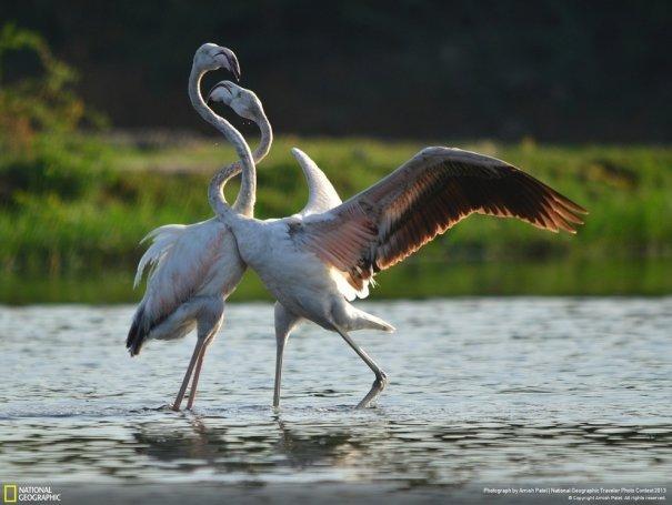 Отобраны лучшие фото животных с фотоконкурса «National Geographic Traveler» - №10