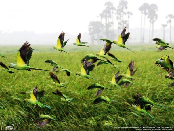 Отобраны лучшие фото животных с фотоконкурса «National Geographic Traveler» - №11
