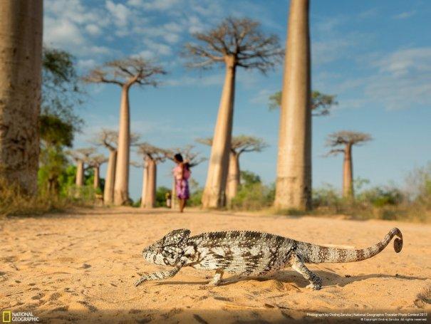 Отобраны лучшие фото животных с фотоконкурса «National Geographic Traveler» - №12